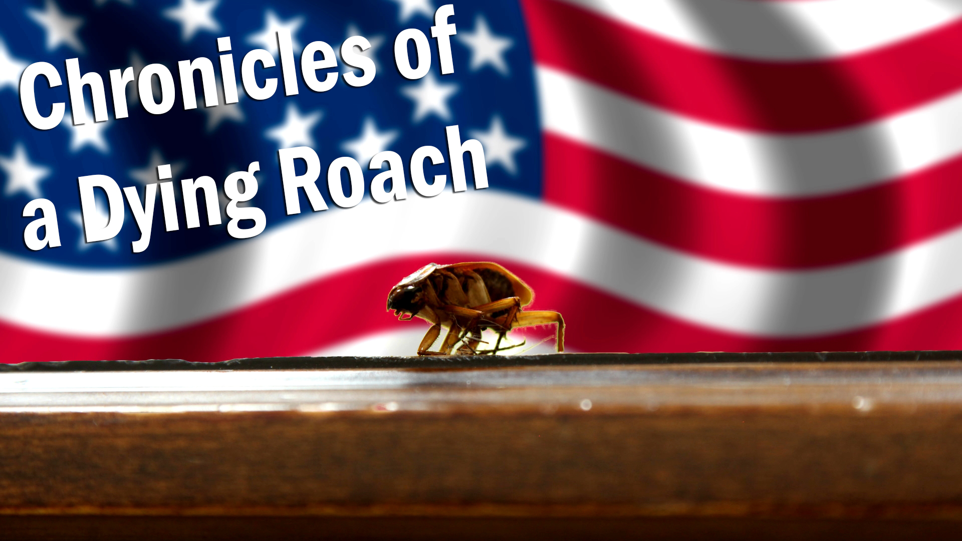 <b>On the brink of death, a roach recounts his life's greatest tragedies and triumphs...</b>